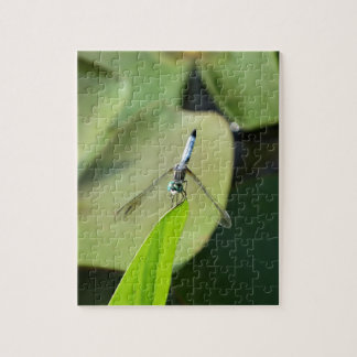 Blue Dragonfly on a green leaf. Jigsaw Puzzles