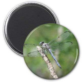 Blue Dragonfly on Perch Magnet