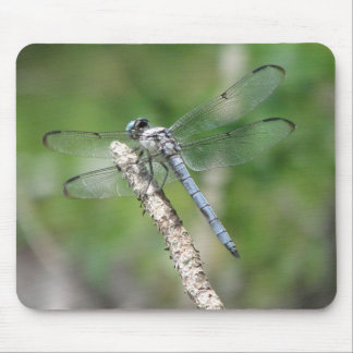 Blue Dragonfly on Perch Mousepad