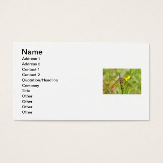 Blue Dragonfly Photo Business Card
