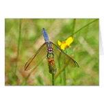 Blue Dragonfly Photo Card