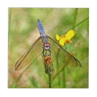 Blue Dragonfly Photo Tiles