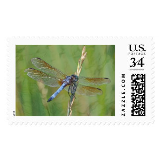 Blue Dragonfly Postage