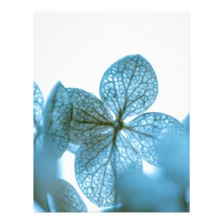 Blue Dream Letterhead