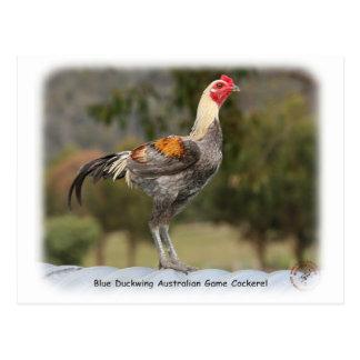 Blue Duckwing Australian Game Cockerel 9Y557D-006 Postcards