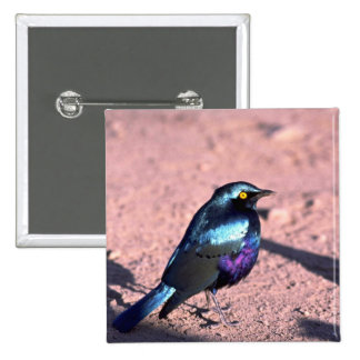 Blue-Eared Glossy Starling Button