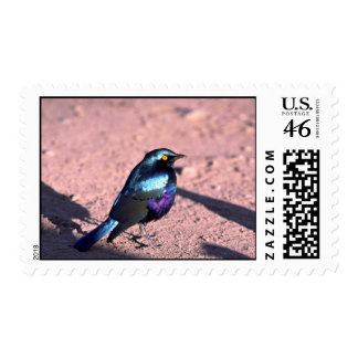 Blue-Eared Glossy Starling Postage Stamp