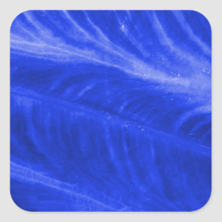 Blue Elephant Ear Texture Square Sticker