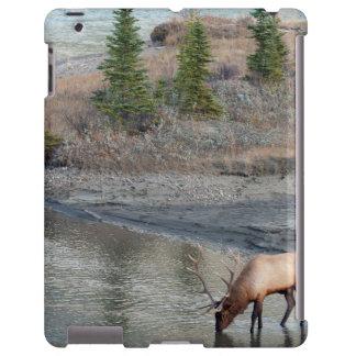 Blue Elk, Rocky Mountain