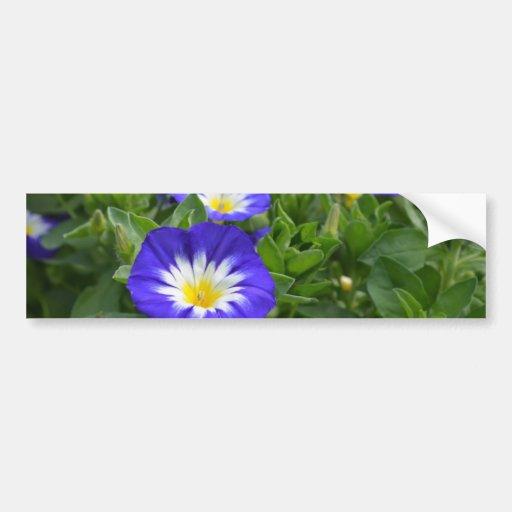 Blue Ensign Morning Glory Flower Bumper Sticker