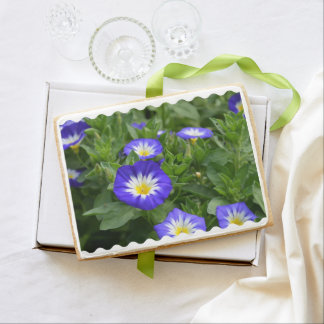 Blue Ensign Morning Glory Jumbo Cookie