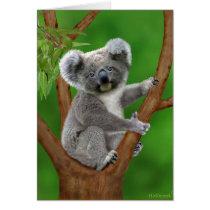 Blue-Eyed Baby Koala Bear