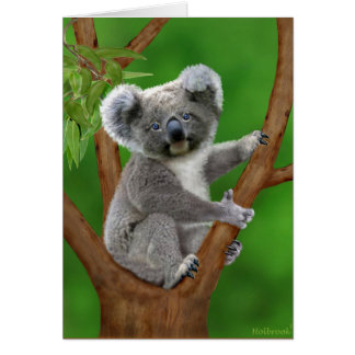 Blue-Eyed Baby Koala Bear Card