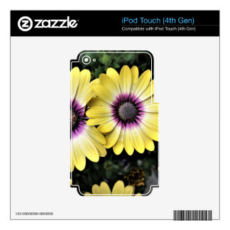 Blue Eyed Beauty African Daisy Osteospermum Skin For iPod Touch 4G
