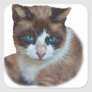 Blue Eyed Brown and White Cat Square Sticker