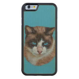 Blue Eyed Brown and White Haughty Cat Carved® Maple iPhone 6 Bumper