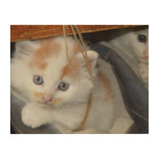 Blue Eyed, Brown and White patched Kitten in boot Wood Print