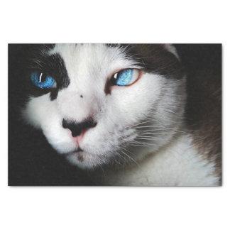 "Blue-Eyed Cat 10"" X 15"" Tissue Paper"