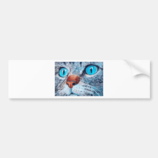 Blue-eyed Cat Bumper Sticker