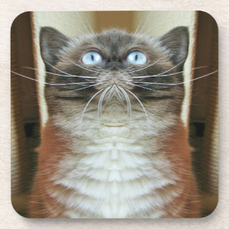 Blue-eyed cat funny portrait drink coasters
