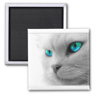 Blue Eyed Cat Magnet
