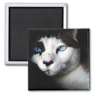 Blue-Eyed Cat Refrigerator Magnet