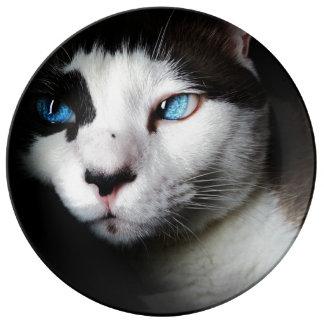 Blue-Eyed Cat Porcelain Plates