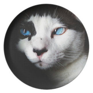Blue-Eyed Cat Dinner Plates