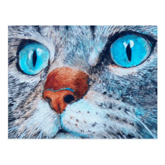 Blue-eyed Cat Postcard