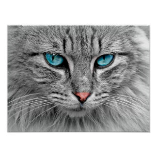 Blue Eyed Cat Poster