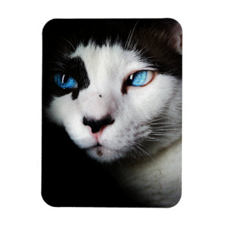 Blue-Eyed Cat Vinyl Magnets