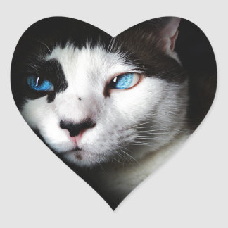 Blue-Eyed Cat Stickers