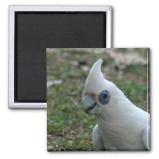 Blue Eyed Cockatoo Magnet