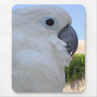 Blue Eyed Cockatoo Mouse Pad
