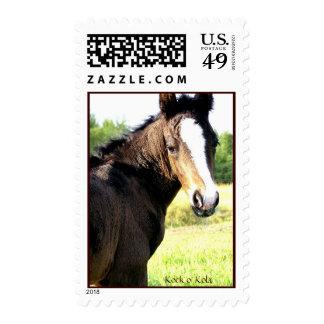Blue-eyed Colt Stamps