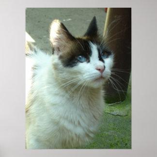 Blue Eyed Dia Kitty Print