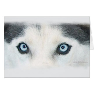 Blue eyed dogs can see the wind card