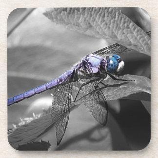 Blue Eyed Dragonfly Coaster