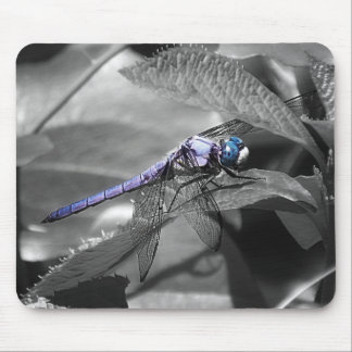 Blue Eyed Dragonfly Mouse Pads