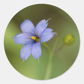 Blue Eyed Grass Wildflower Floral Round Stickers