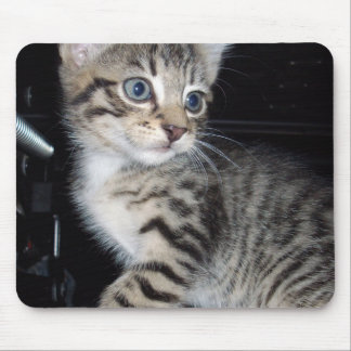 Blue Eyed Grey Fluffy Striped Kitten, Mouse Pad