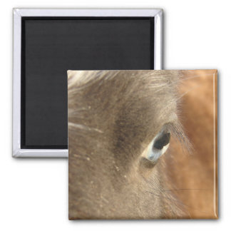 Blue Eyed Horse Magnet