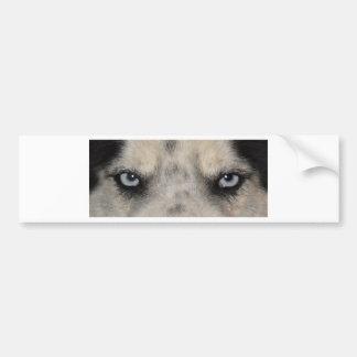 Blue eyed Husky dog Bumper Sticker