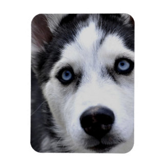 Blue Eyed Husky Flexible Magnet