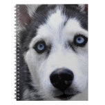 Blue Eyed Husky Notebook
