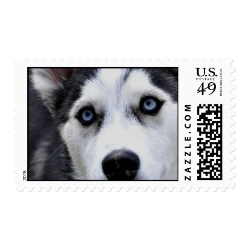 Blue Eyed Husky Postage Stamp