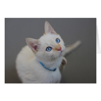 Blue Eyed Kitten Blank Card by Focus for a Cause