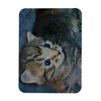 Blue eyed kitten magnet