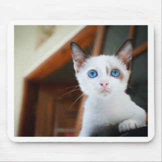 Blue-Eyed Kitten Mouse Pad