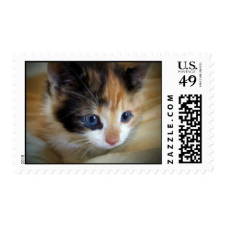 Blue Eyed Kitten Postage